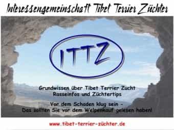 Tibet Ttrrier Welpen Kaufen Tibet Ttrrier Welpen Bei Dhd24 Com