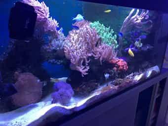 Haustierbedarf Aquarium Komplett Gebraucht