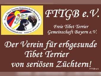 Tibet Terrier Welpen Und Hunde Kaufen Dhd24 Com