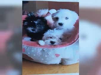 Hund Zu Verschenken Hunde Anzeigen Bei Dhd24 Com
