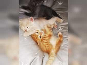 Rote Katze Kaufen Rote Katze Gebraucht Dhd24 Com