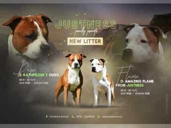 Terrier Welpen Kaufen Terrier Welpen Gebraucht Dhd24 Com
