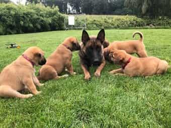 Mischlings Hund Kaufen Mischlings Hund Welpen Dhd24 Com
