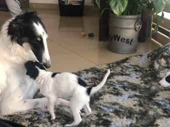 Hundewelpen kaufen - Hundewelpen bei dhd24.com